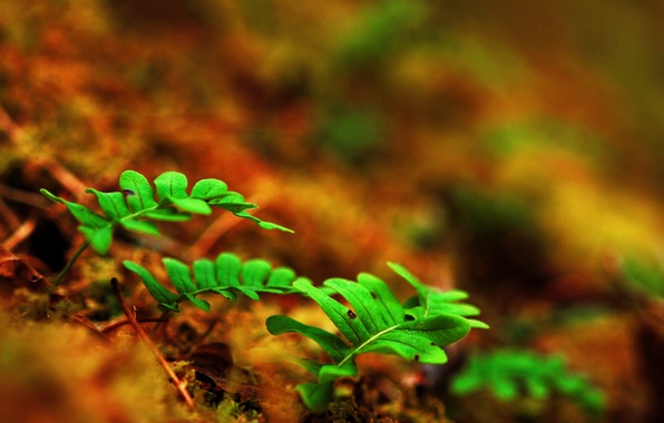 Picture leaves, macro, sprouts, earth, fern, shoots