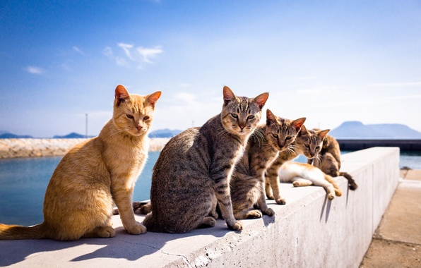 Picture summer, background, cats, A Tomcat