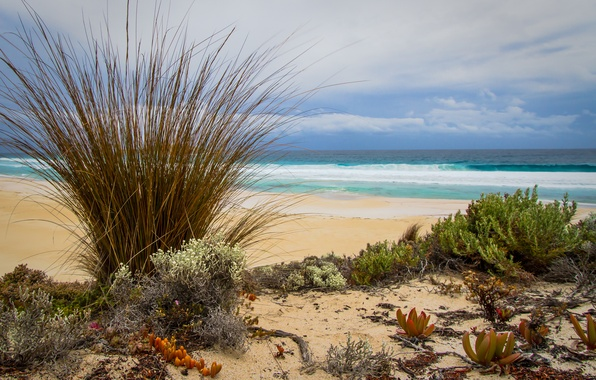 Picture sand, sea, beach, grass