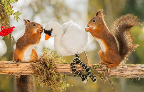 Picture animals, berries, tree, bird, toy, branch, Rowan, proteins, rodents, rosary