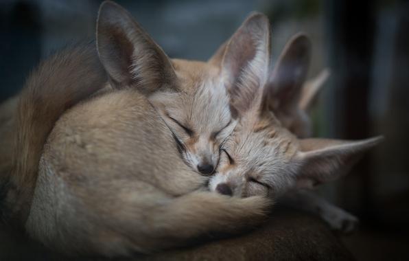 Picture animals, nature, comfort
