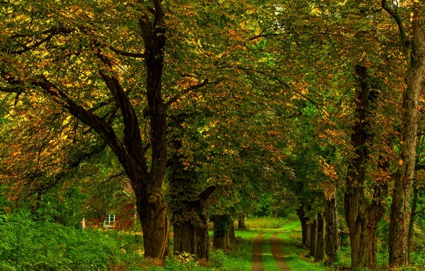 Picture road, autumn, forest, grass, leaves, trees, nature, house, Park, colors, colorful, house, grass, forest, road, ...