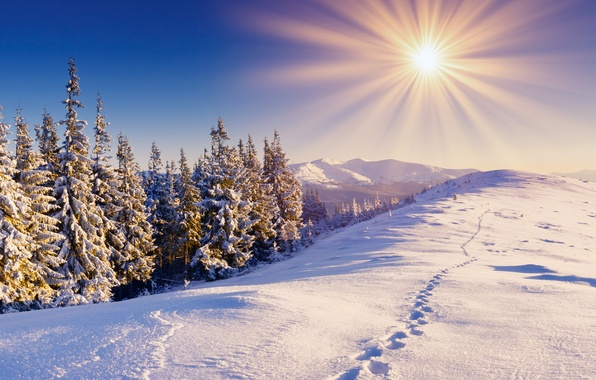 Picture winter, forest, the sky, the sun, snow, mountains, traces