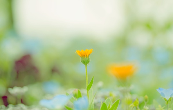 Picture greens, flower, color, macro, orange, nature, background, paint, glade, plant, spring, blur