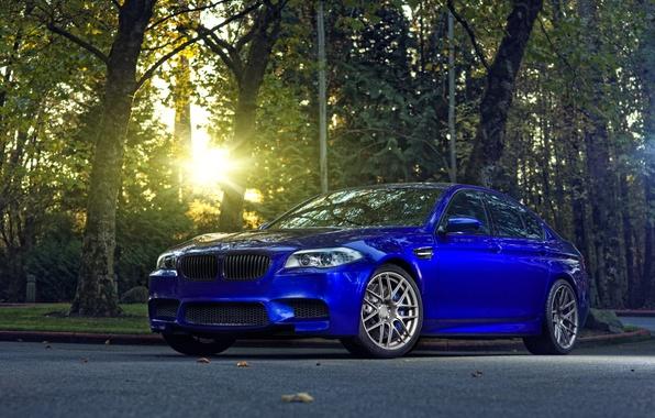 Picture trees, blue, BMW, BMW, f10, monte carlo blue, the sun glare