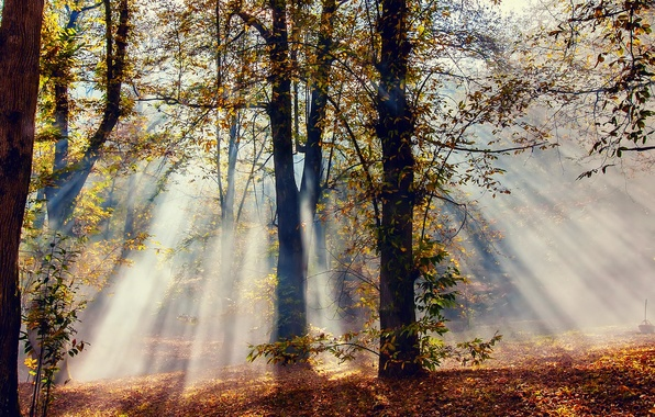 Picture autumn, forest, rays, light, trees, nature, foliage