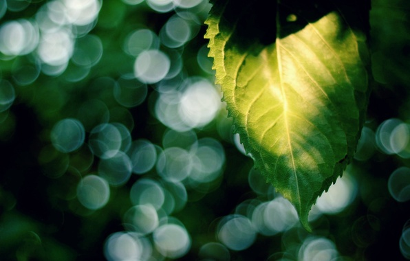 Picture leaves, the sun, macro, rays, green, background, widescreen, Wallpaper, blur, leaf, wallpaper, leaf, widescreen, background, …