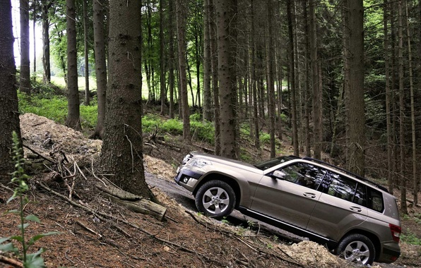 Picture forest, trees, Auto, SUV