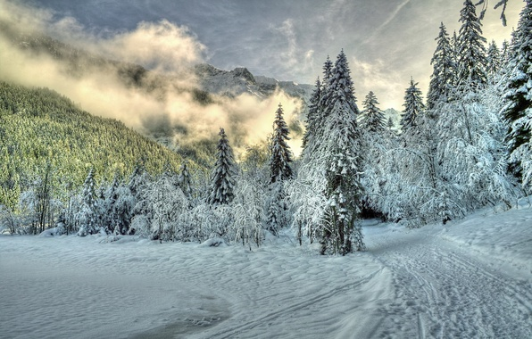 Picture winter, forest, clouds, snow, trees, mountains, nature, fog, trail