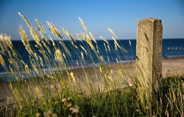 Picture sea, beach, grass, landscape