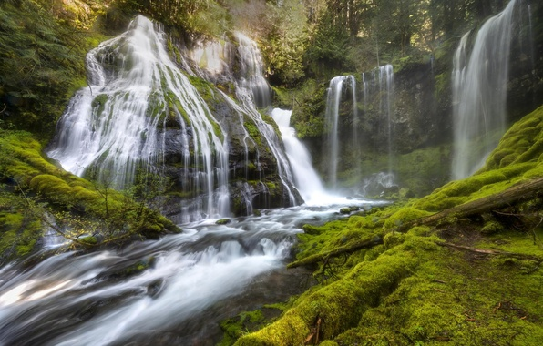 Picture forest, trees, nature, waterfall, plants