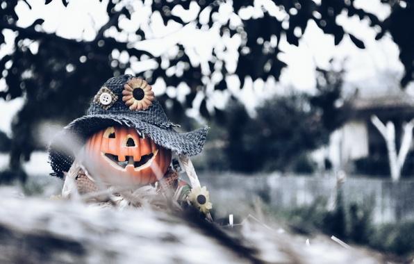 Picture background, Halloween, pumpkin