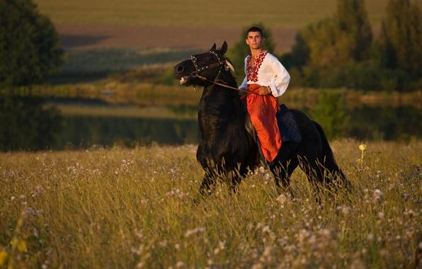 Picture field, horse, male, Ukraine, Ukraine
