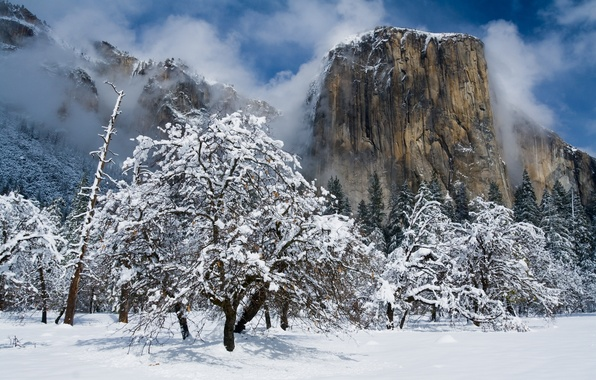 Picture winter, snow, trees, mountains, CA, Yosemite, California, Yosemite national Park, Yosemite National Park, The Captain, …