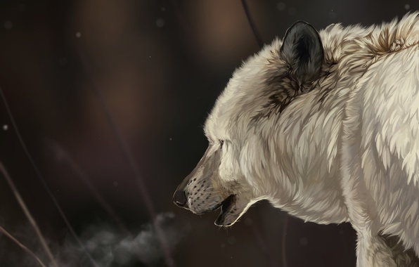 Picture winter, white, face, snow, snowflakes, wolf, head, art, fur