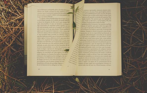 Picture grass, book, novel