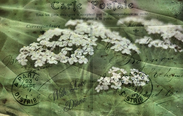 Picture flowers, style, background, postcard