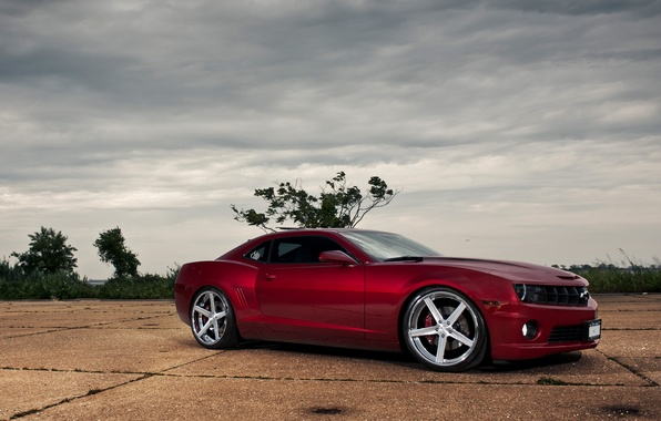 Picture trees, red, red, Chevrolet, side view, chevrolet, the bushes, camaro ss, Camaro SS