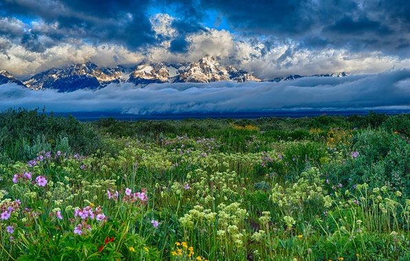 Picture field, clouds, snow, landscape, flowers, mountains, nature
