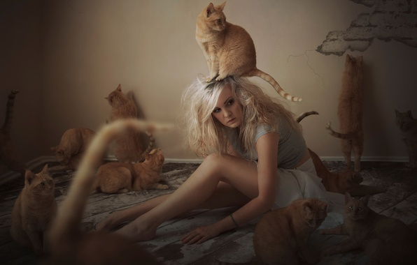 Picture girl, cats, cats, red