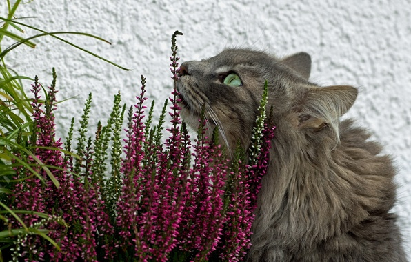 Picture cat, grass, flowers, grey, fluffy