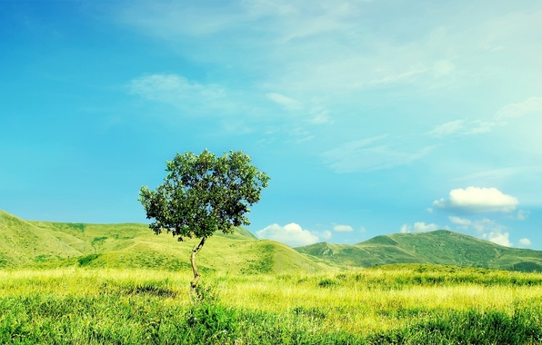 Picture field, summer, nature, grass, sky, tree, hills, ittle tree