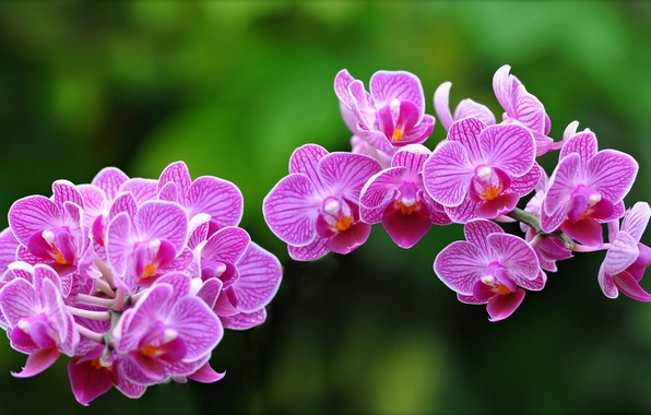 Picture macro, orchids, exotic