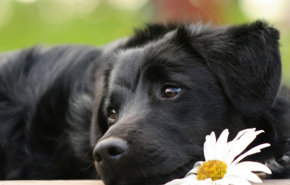 Picture flower, eyes, dog