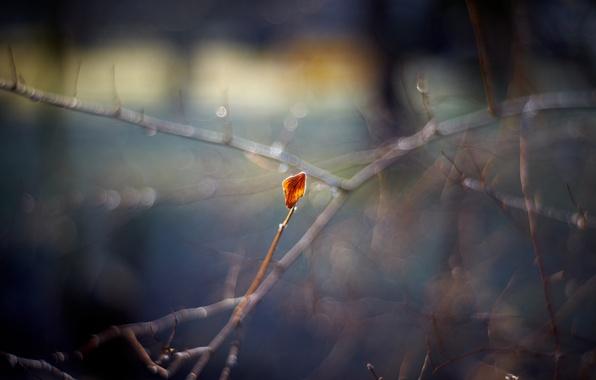 Picture autumn, macro, branches, sheet, glare, bokeh