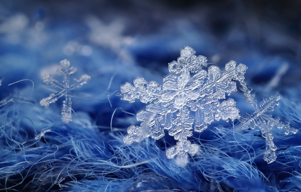 Photo wallpaper macro, snowflake, background