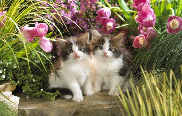 Picture greens, animals, cats, flowers, kittens, tulips, kids