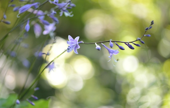 Picture flowers, glare, branch, lilac