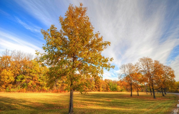 Picture road, autumn, trees, Park, tree