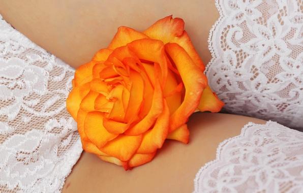 Picture flower, Wallpaper, white, linen
