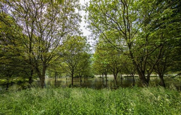 trees germany grass - photo #12