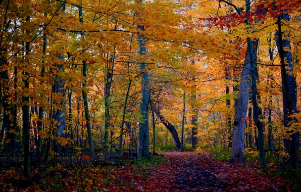 Picture autumn, forest, trees, nature, photo, trail