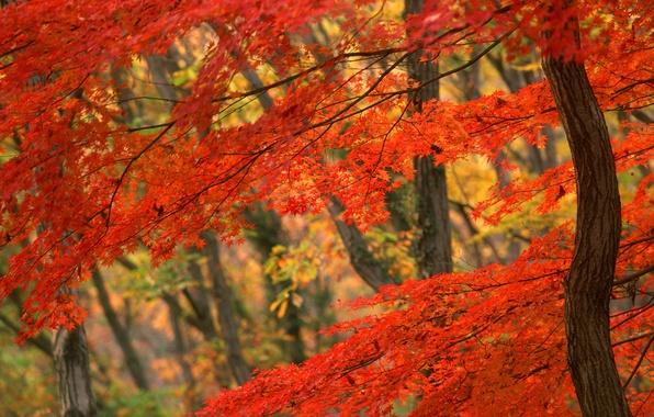 Picture Tree, Autumn, Japan