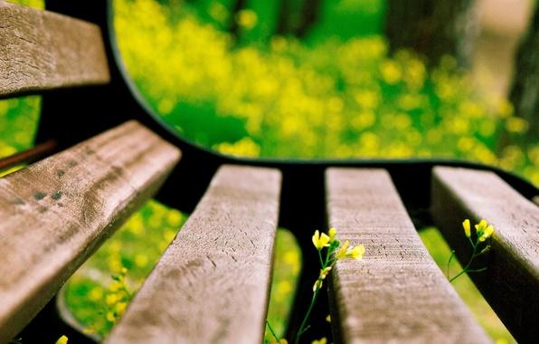 Picture flower, macro, flowers, bench, yellow, background, widescreen, Wallpaper, blur, shop, shop, wallpaper, flower, bench, widescreen, …