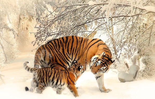 Picture winter, cat, snow, tiger, tiger