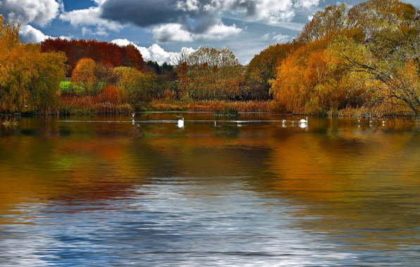 Picture autumn, the sky, clouds, trees, birds, lake, pond, swans