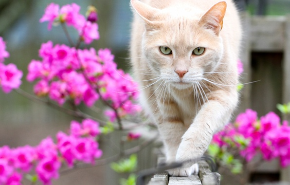 Picture cat, look, flowers, bokeh