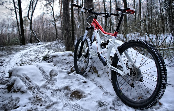 Picture winter, forest, snow, bike, frame, color