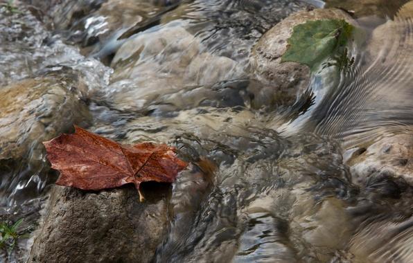 Picture autumn, water, macro, sheet, stream, stream