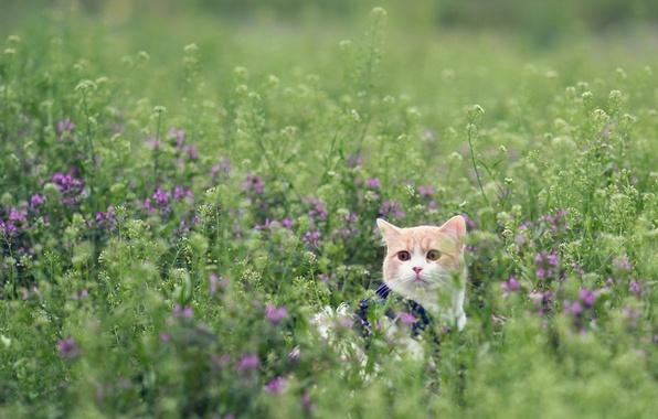 Picture field, cat, grass, torode