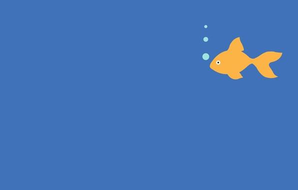 Picture animals, bubbles, fish