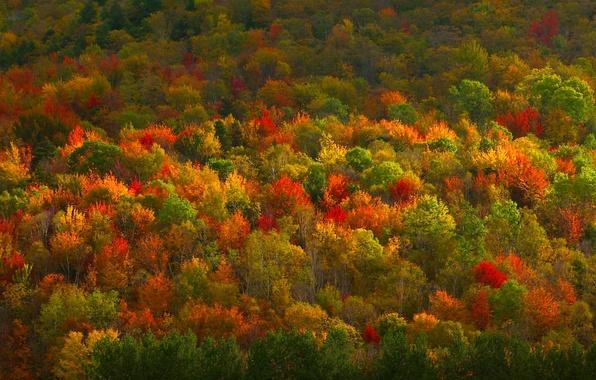 Picture autumn, forest, trees, paint, texture