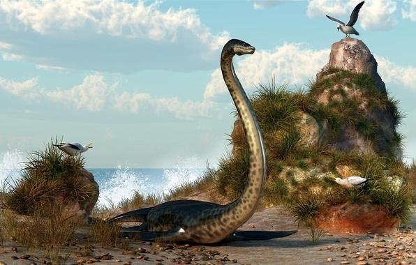 Picture sea, stones, seagulls, dinosaur, art, shell, deskridge