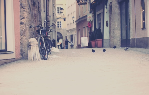 Picture birds, bike, city, the city, photo, street, home, track, pigeons, is, the sidewalk, Wallpaper for …