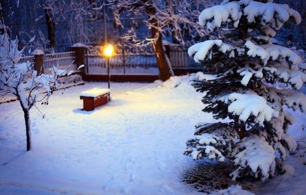 Picture winter, snow, trees, nature, tree, spruce, lighting, yard, lantern, tree
