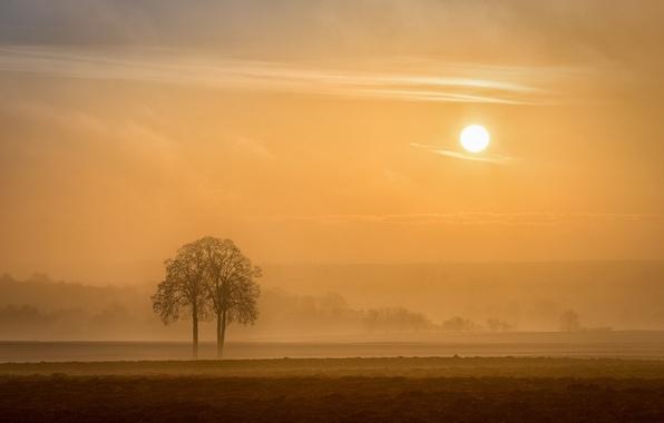 Picture France, Alsace Region, Alsace, arbre